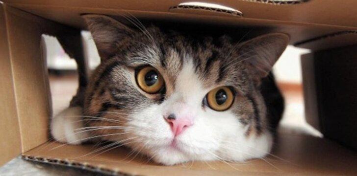 Niekas negali paaiškinti, kodėl šis katinas taip elgiasi