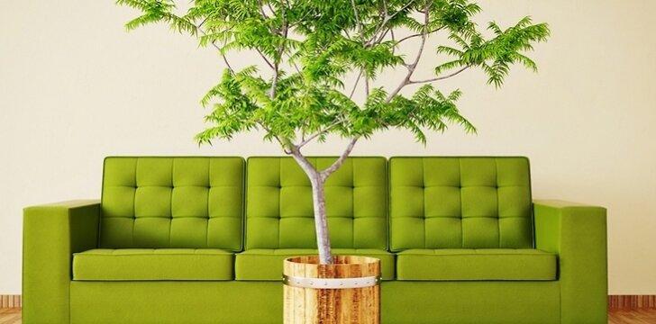 Kartais nė neįtariame, kiek nuodingų medžiagų į orą gali išskirti namų apdailos priemonės. Nuo jų poveikio gali apsaugoti tinkamai pasirinkti naminiai augalai.