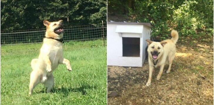 Šuo po 3 metų ištrūksta į laisvę