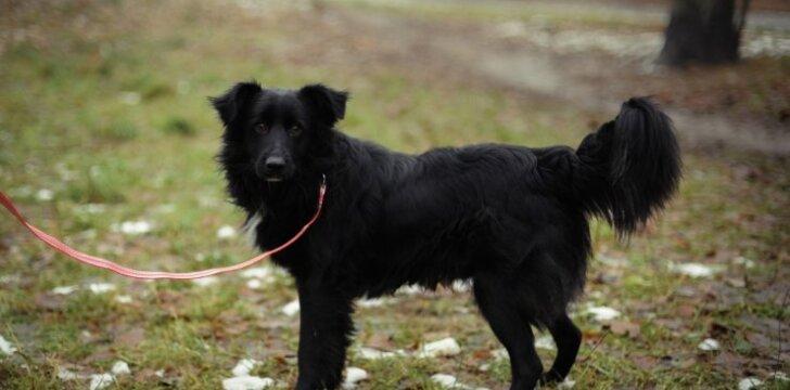 Šunelis ieško naujų šeimininkų