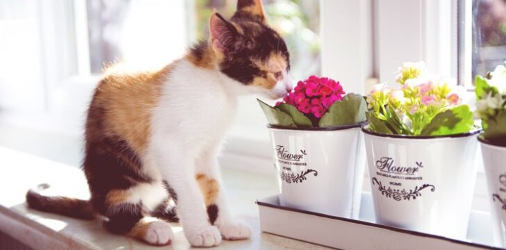 Augalai, kurie kenkia katėms