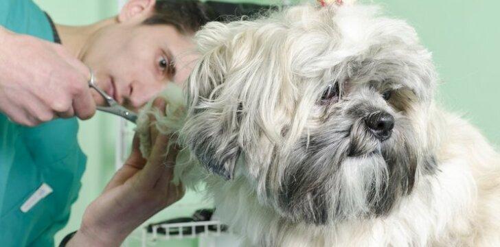 Iš prieglaudos paimti šuneliai dažnai turi trukdančių sąvėlų