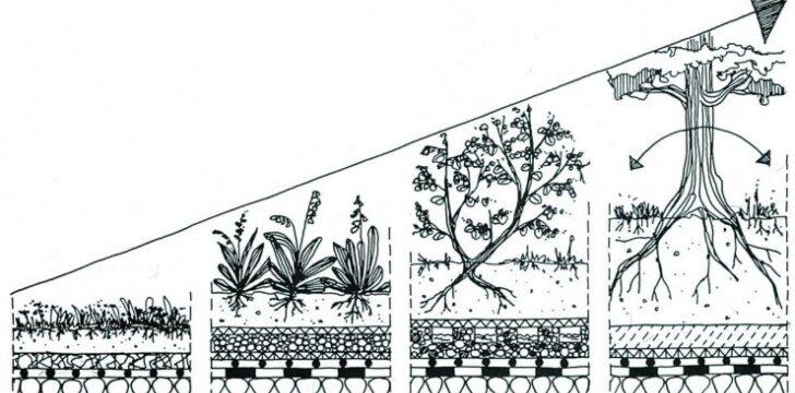Žalieji stogai – ar lietuviams jų reikia?