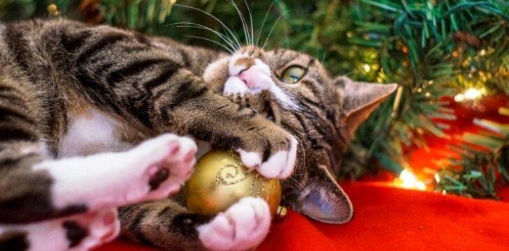 """JUOKINGA: kaip <span style=""""color: #ff0000;"""">katės</span> <span style=""""color: #ff0000;"""">išdykauja</span> namuose per Kalėdas <sup>VIDEO</sup>"""