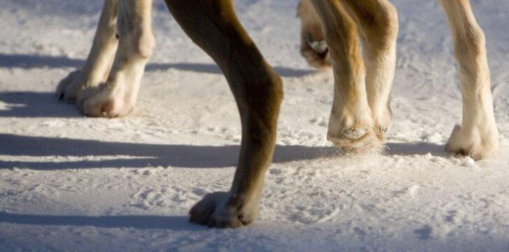 Kaip tinkamai prižiūrėti šuns nagus?