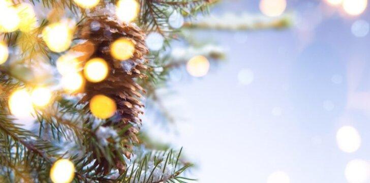 Kaip pasirinkti kalėdinę eglutę, kad ilgai išstovėtų graži