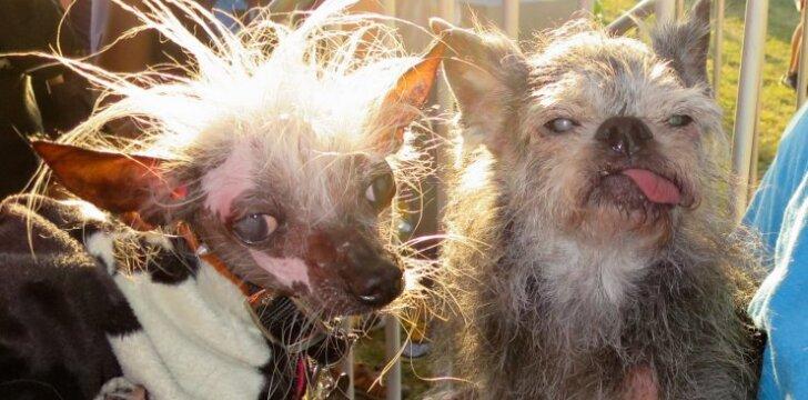 Baisiausio šuns konkurse kasmet dalyvauja likimo nuskriausti keturkojai