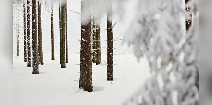 <strong>Miškai.</strong> Nuomonė. Radikalizmas ir gamtosauga