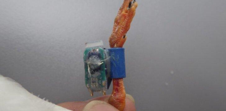 Mikrokompiuteris, pritaisytas prie žuvėdros kojos/ LEU nuotr.