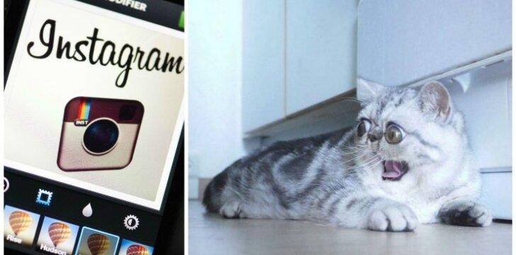 Didžiaakis katinas žavi internautus