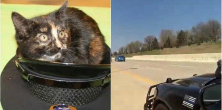 Pareigūno išgelbėta katytė