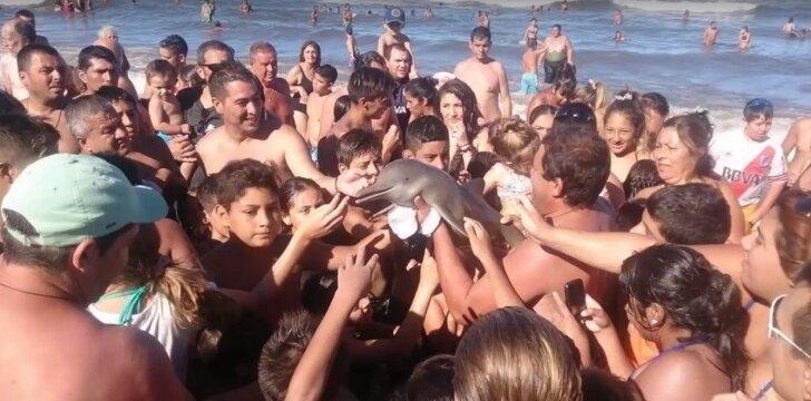 Dėl selfių nužudė delfinuką