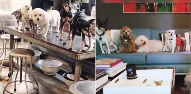 Gyvūnų prieglauda namuose
