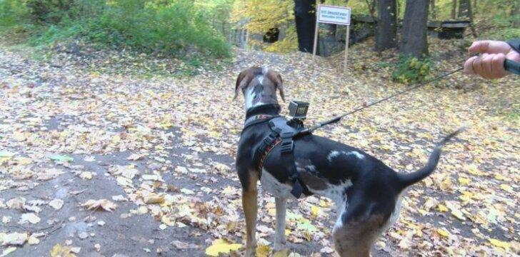 Šuo, sekęs pagal kvapą