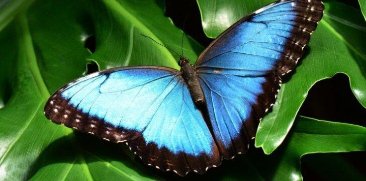 Vieta, kur jautiesi tarsi rojuje - drugelių namai