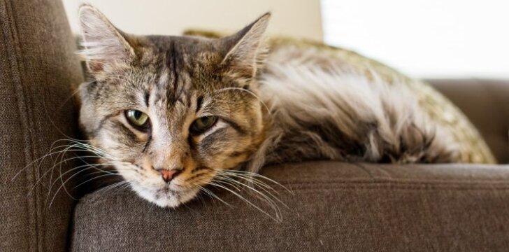 Kodėl katės ir katinai šeriasi