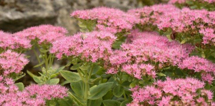Tvirtiname šlaitinį sklypą: metodai ir apželdinimui tinkami augalai