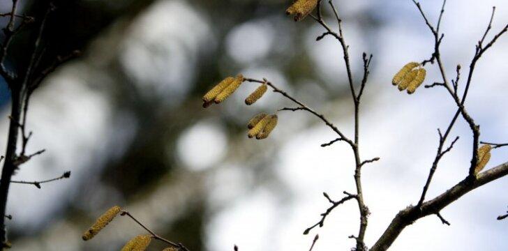 Gamtininkai prašo pavasarį nelaužyti medžių šakelių
