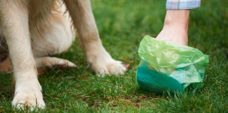 Ką šuns išmatų spalva išduoda apie jo sveikatą
