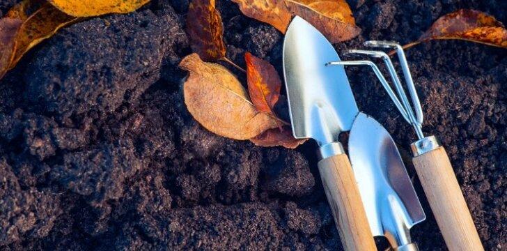 Svarbūs rudens pradžios darbai darže
