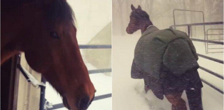 Kumelaičių reakcija į sniegą prajuokino internautus