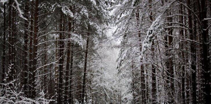 Kokių grybų galime rasti žiemą?