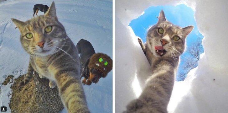 """Katė, kuri <span style=""""color: #c00000;"""">stebina</span> tobulomis savo nuotraukomis"""