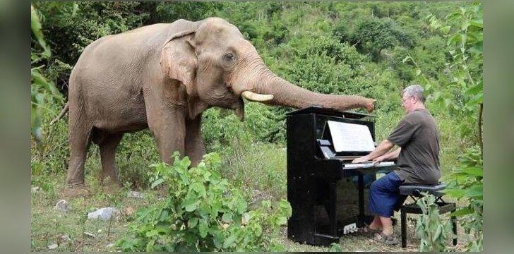 Vyras groja akliems drambliams