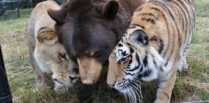 Trys broliai nesitraukia vienas nuo kito jau 15 metų