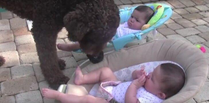 """Pamatykite: šuo <span style=""""color: #c00000;"""">niekaip nesupranta,</span> kodėl kūdikiai nenori su juo žaisti"""