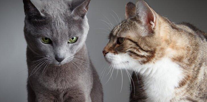 """Ką jūsų katės veislė <span style=""""color: #ff0000;"""">sako apie JUS?</span>"""