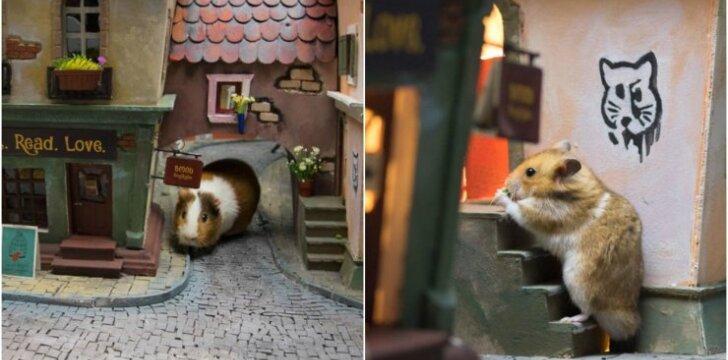 Miniatiūrinis miestelis žiurkėnams