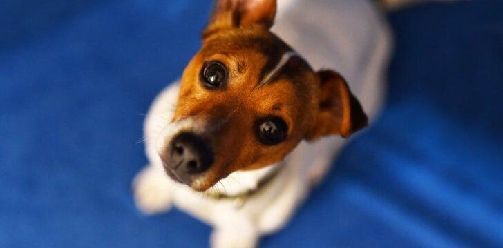 Atskleidė seną paslaptį: kokį pasaulį regi šunys