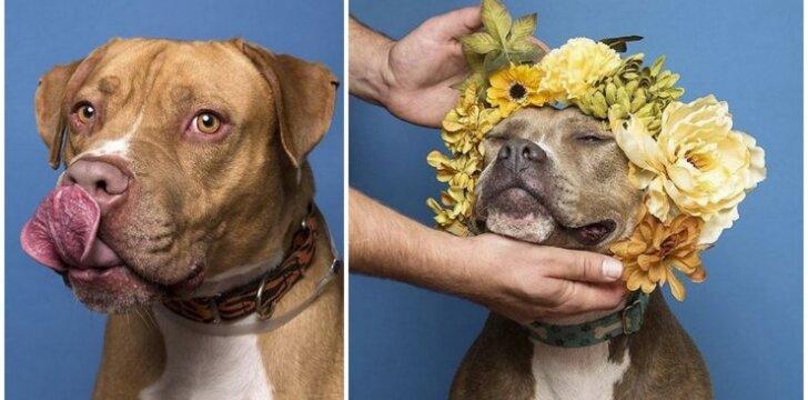 Neteiskite šių šunų... Jie nepadarė nieko blogo
