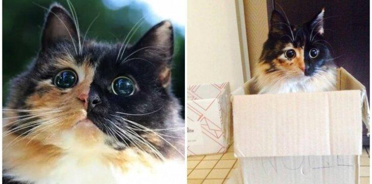 Akla katytė