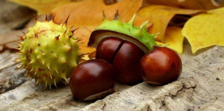 Nemokami skalbimo milteliai, kurie auga ant medžių ir gali būti naudojami visus metus