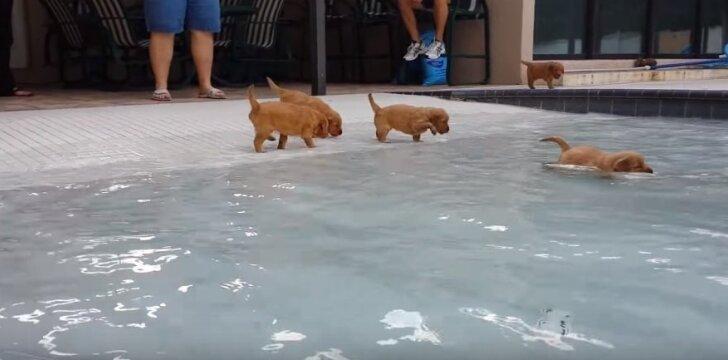 Šuniukai mokosi plaukti