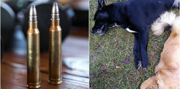 Januliškio bažnytkaimyje nušauti šunys