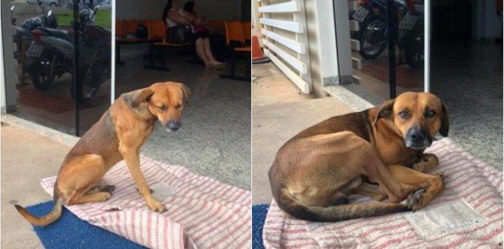 Šeimininko prie ligoninės laukiantis šuo