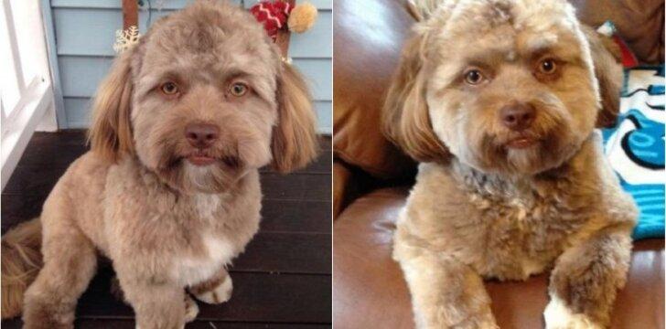 Šuo, primenantis žmogų
