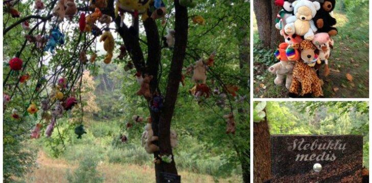"""Stebuklų medis netoli Vilniaus - nusikaltimas gamtai <span style=""""color: #ff0000;""""><sup>aiškėja naujos detalės</sup></span>"""