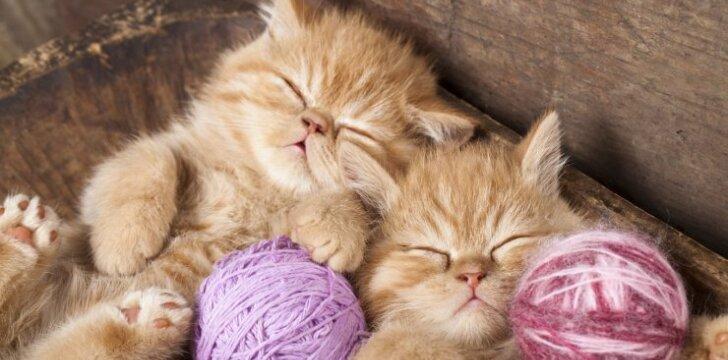 Kačiukai, asociatyvi nuotr.