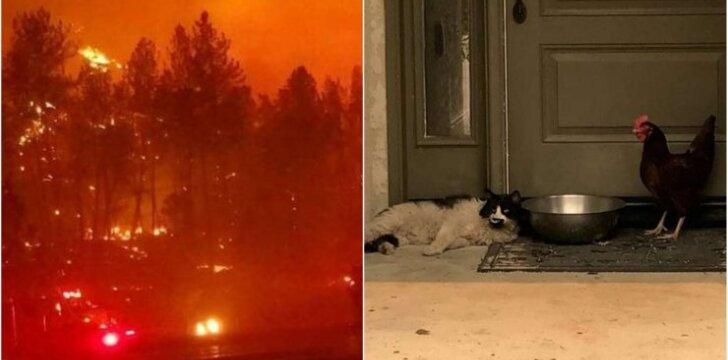 Gyvūnai drauge išsigelbėjo nuo gaisro
