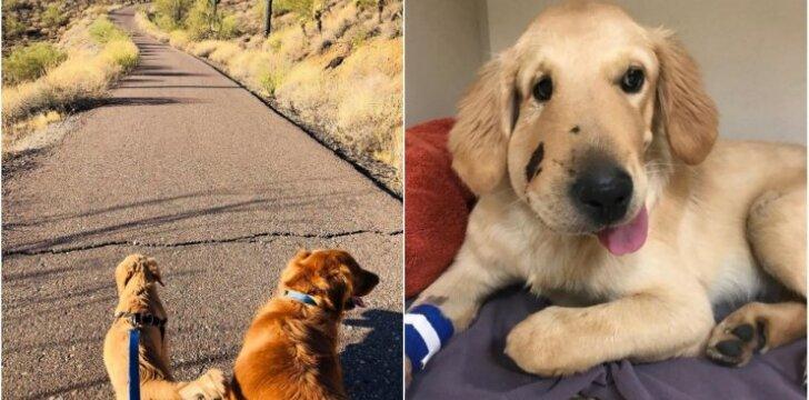 Šuo, išgelbėjęs šeimininkę nuo barškuolės