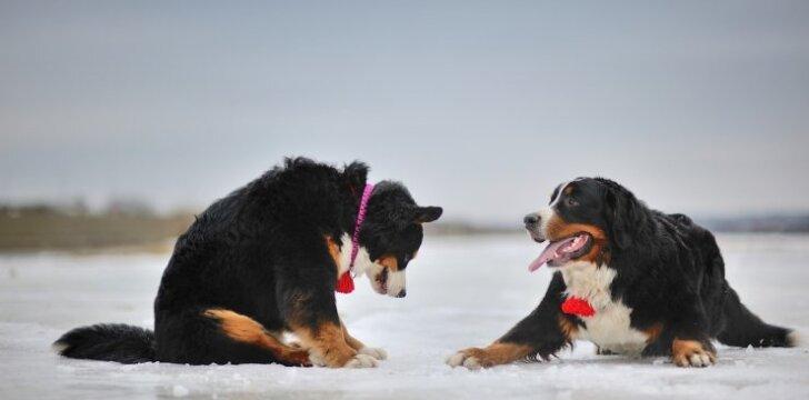 Dideli šunys užkariavo R. Leonavičienės ir jos dukters širdis (Nuotr. aut. Andrius Kairys)