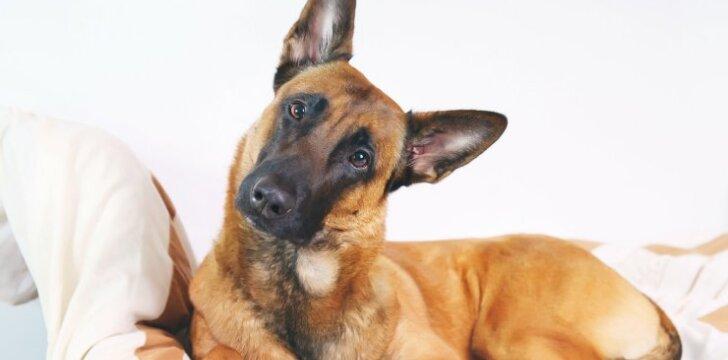 Kūno vyniojimas - galimas išsigelbėjimas turintiems problematišką šunį