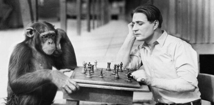 Užprogramuoti neištikimybei, arba Kas bendra tarp vyrų ir gorilų