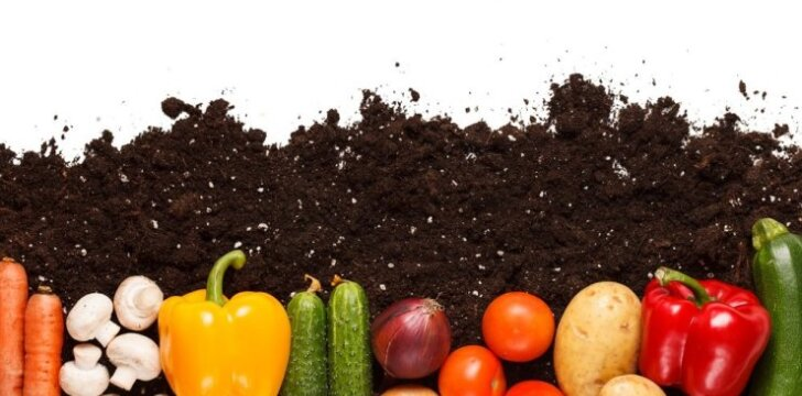 Kaip sėti daržoves prieš žiemą