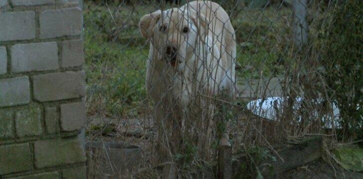 """""""TV pagalbos"""" istorija apie šeimininko kankintą kalytę Betę sujaudino tūkstančius žmonių – ar keisis baudos už gyvūnų kankinimą"""