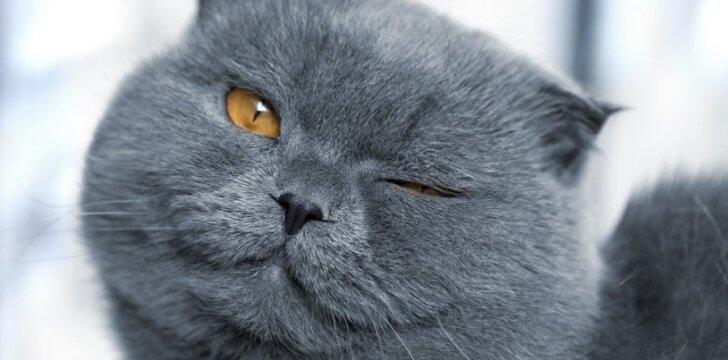 Leiskite katinui manyti, kad ne jūs - jį, o jis - jus pasirinko... tarnystei.